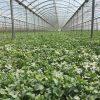 Investigación del CEBAS en un cultivo